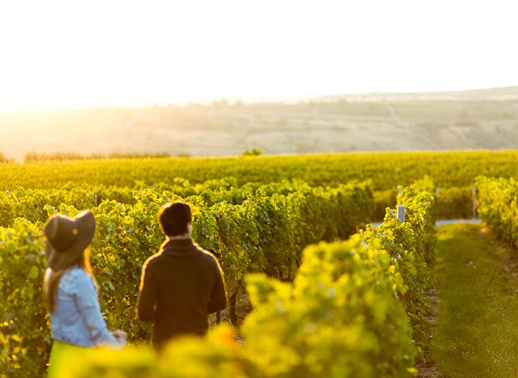 Deux jeunes personnes observent le paysage dans les vignes