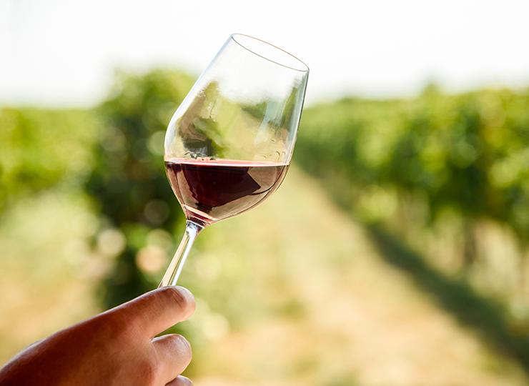 L'Abouriou permet de créer une grande palette de vins en Côtes du Marmandais